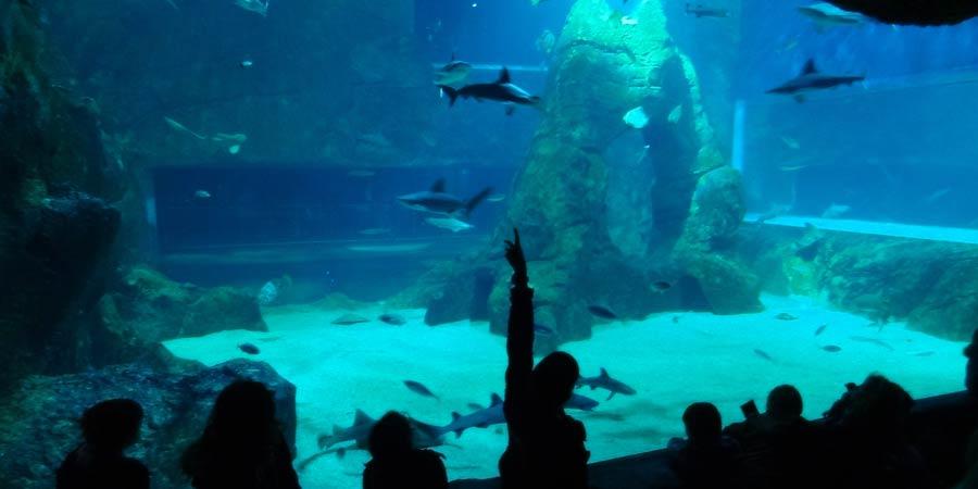 Face-à-face avec les requins