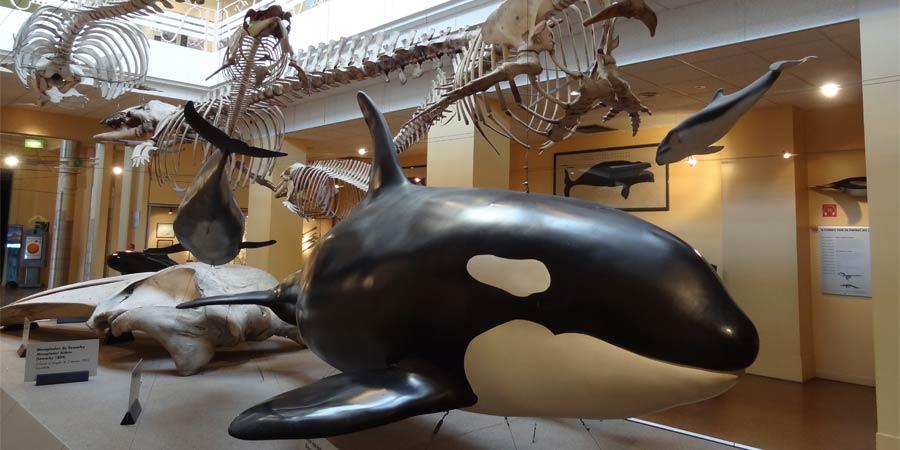 Galería de los cetáceos