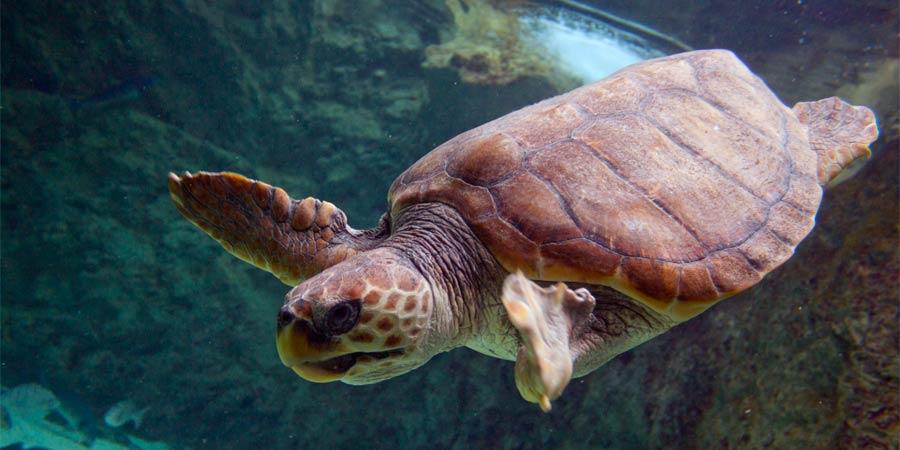 Grotte des tortues