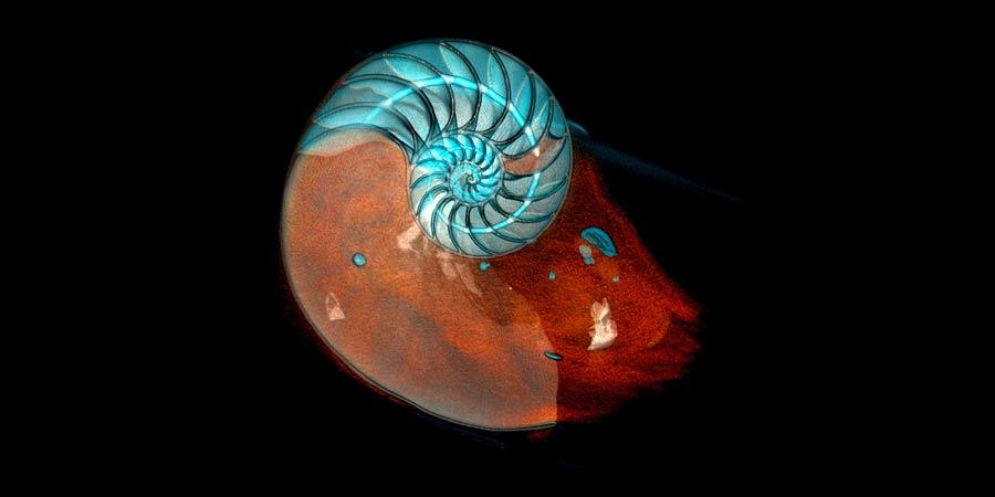 Scan Océan, voyage insolite au coeur des espèces marines