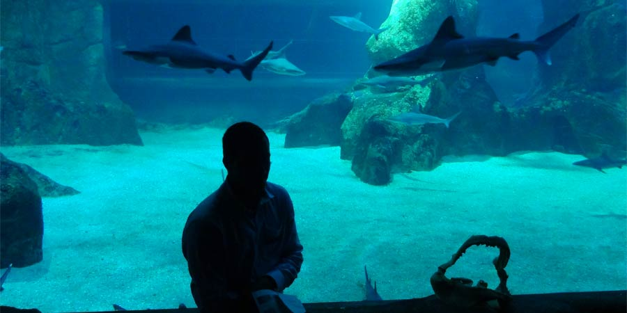 Dining with sharks !