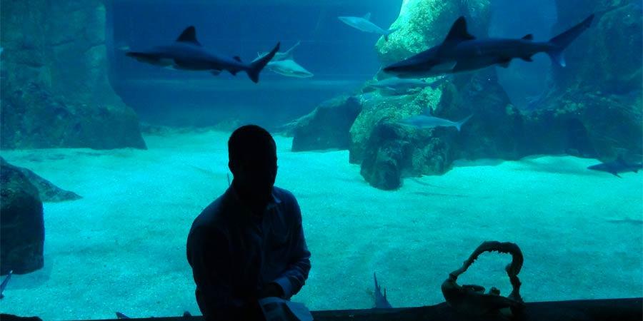 À table avec les requins !