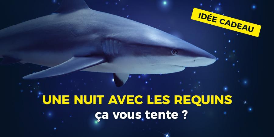 Une nuit avec les requins, cap ou pas cap ?