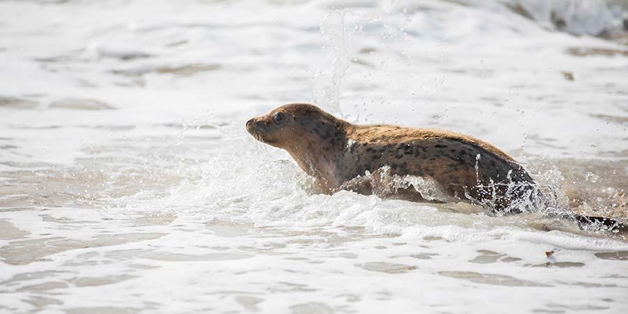 Quatre jeunes phoques recueillis au centre de soins en 2019