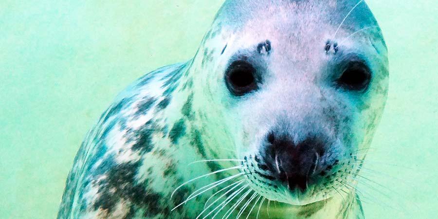 """L'Aquarium de Biarritz s'apprête à dire """"au revoir"""" à Noëlla"""